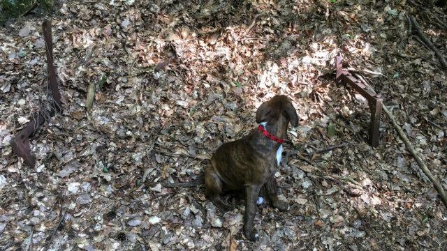 Ławeczka w lesie oliwskim.